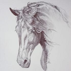 A portrait of a fresian stallion
