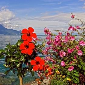 На брега на езеро Леман