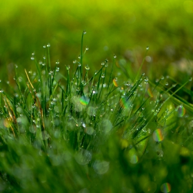 Трева окъпана от утринната роса.