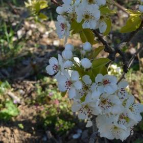 Пролетно ухание