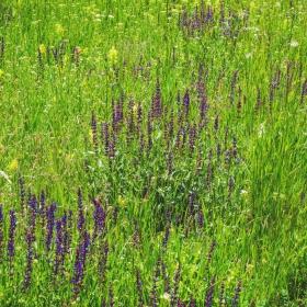 Треви и цветя