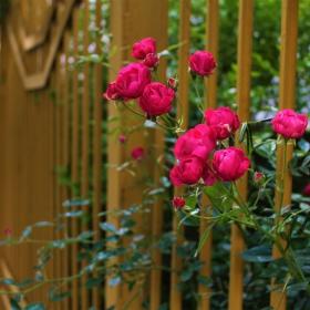 Срещи през оградата