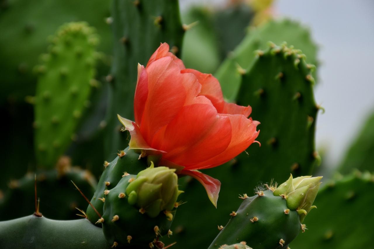в ботаническата градина Балчик