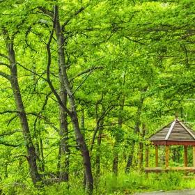 Беседка в гората - по пътя за Владая