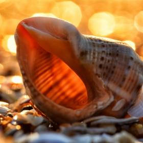 Морски шепот