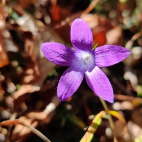 друго цвете2