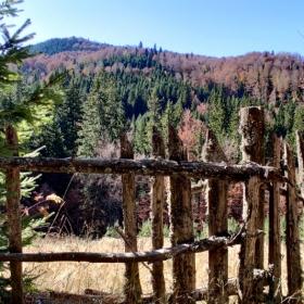 Ограда пазеща нищото
