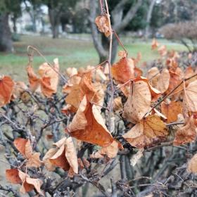 Есента ни напомня