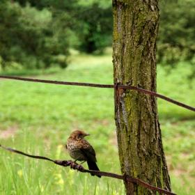 птица на жица