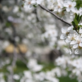 За Пролетта