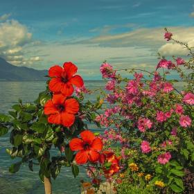 На брега на Женевското езеро