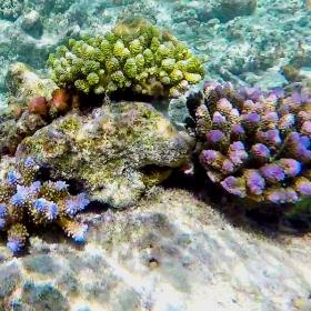 Коралова градинка